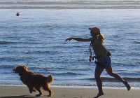 de hond lekker los op het strand